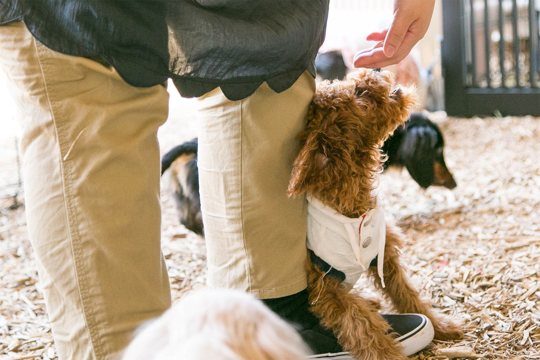ハッピー犬屋敷の保護犬